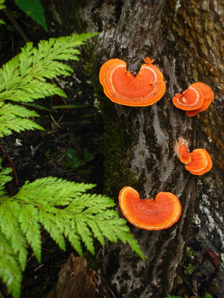fotografia de natureza cogumelos